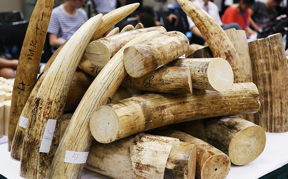 中國的富豪正因為最愚蠢到我快要吐白沫的原因在搶購瀕臨絕種動物的身體部位。