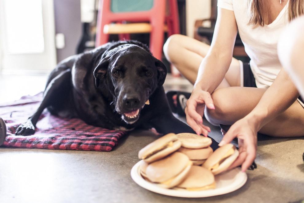 「我今天將要死了」這隻狗狗在地球上的最後一天的故事會教會你人生中最重要的事情。
