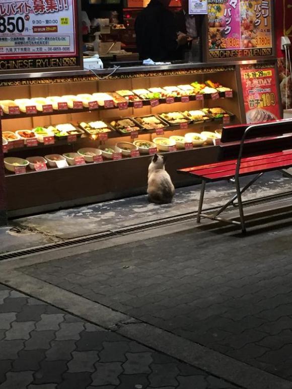 日本網友拍下這隻「觀望便當很久的貓」,當他站起來要點餐時我心都軟了!