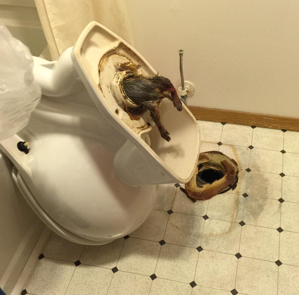 他在飯店房間聽到廁所傳出一陣怪聲音,結果他在馬桶裡發現了這個會害人失眠好幾天的東西...