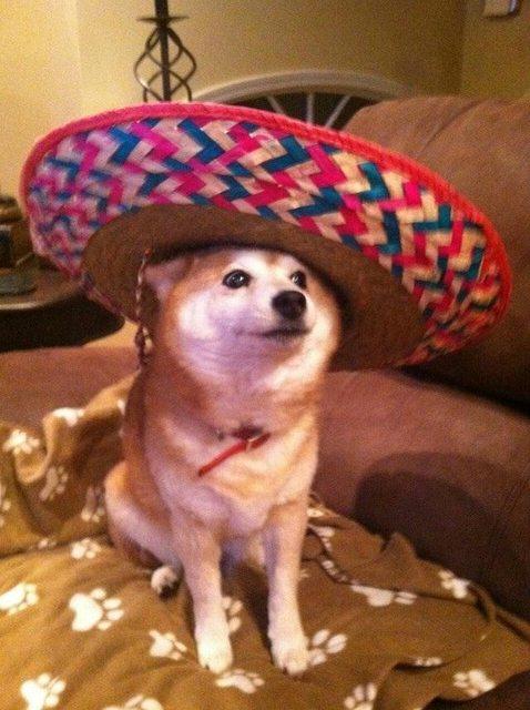 Mucho wow. Tal hat. Mucha cultura