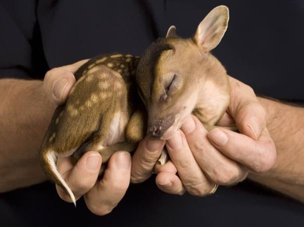 26隻讓你視線離不開螢幕的超萌動物寶寶,今天上班的疲勞感就靠他們來解救了!