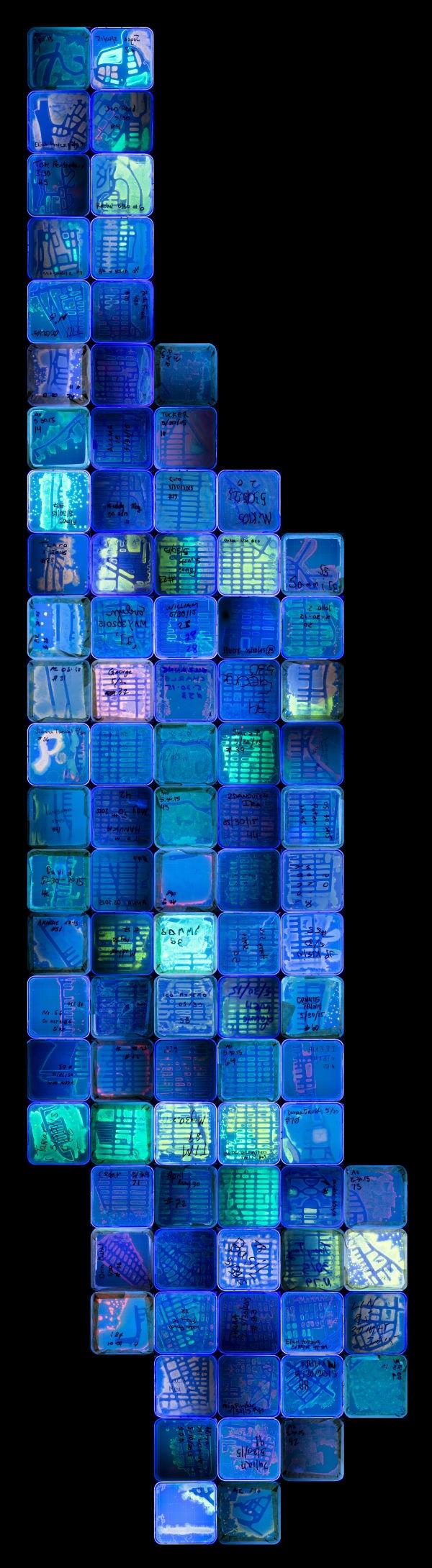 有細菌恐懼症的我都不敢靠近這些作品,但這些「微生物藝術」真的太美了讓我無法不看下去!