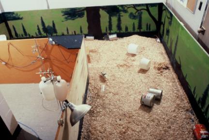 科學家把很多隻老鼠放在一個「完美老鼠樂園」裡,結果意外解開了人類行為最大的謎底!