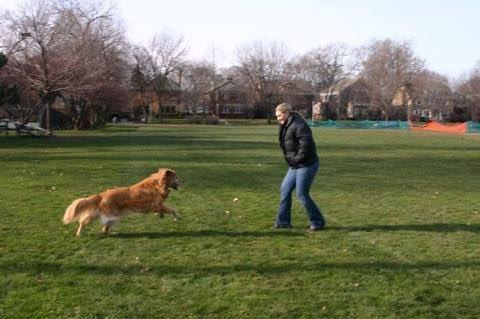 她將12歲過世的狗狗火化後骨灰灑向空中,出現的奇蹟畫面證明狗狗對我們永恆的愛!