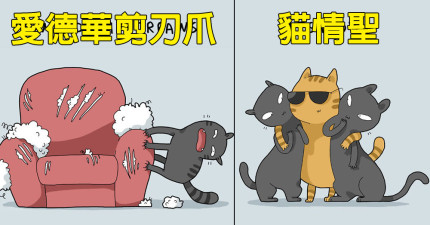 12種「全天下貓奴都會會心一笑」貓咪爆笑分類。你家貓咪是哪一種?