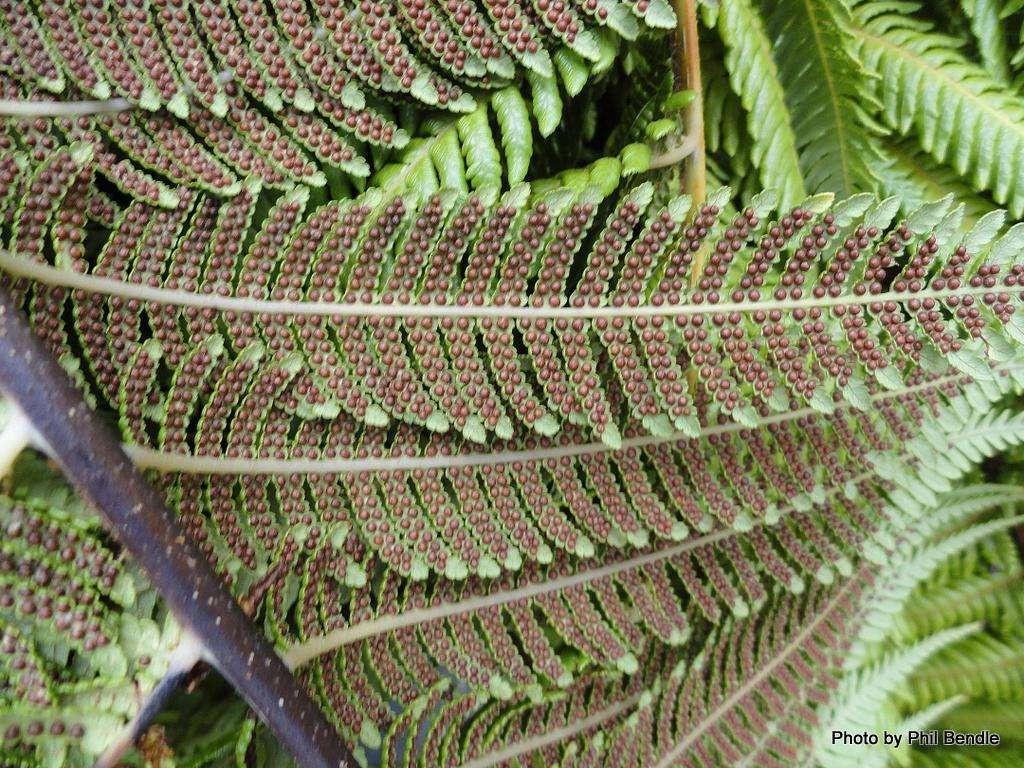 fern-leaves-photo-u1