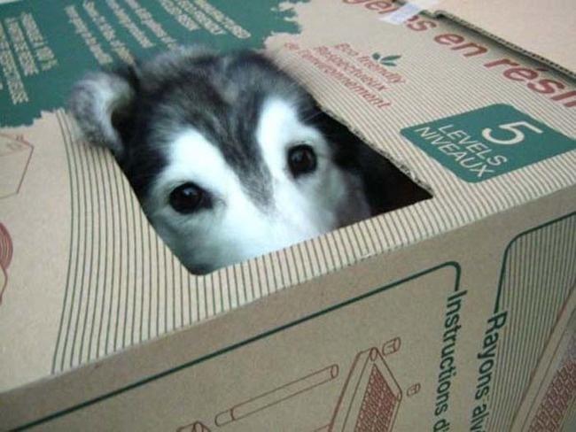 23隻「誤以為自己是貓咪」的爆笑狗狗!