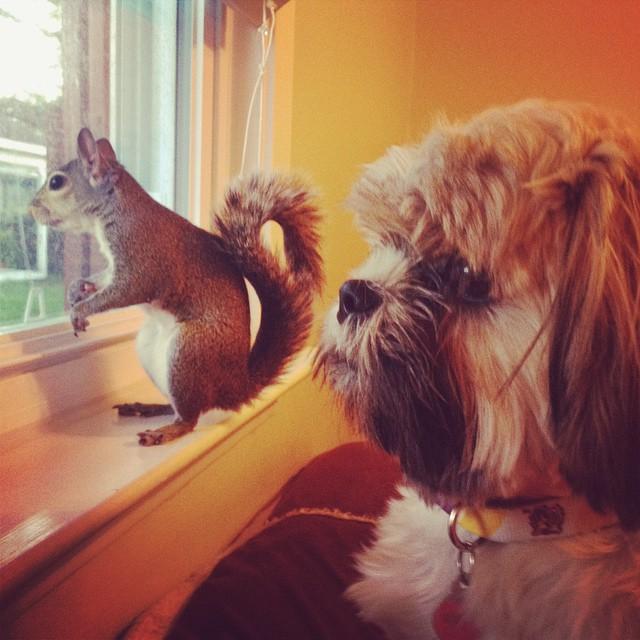 他們在一場颱風中把這隻松鼠救回家一開始還怕說他會來亂的,但現在快看看他現在的萌樣!
