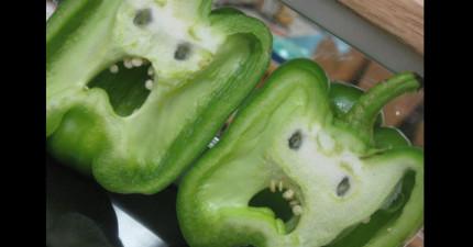 科學家發現到植物其實都知道他們正在被吃掉,而且都很討厭那感覺!