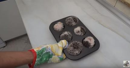 在你發現到這個馬芬烤盤裡的是什麼東西時,你內心最後一道防線就會被可愛擊垮!