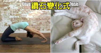 18張「人類動物瑜伽對比照」會讓你看到其實只有人類落後到需要學瑜伽!