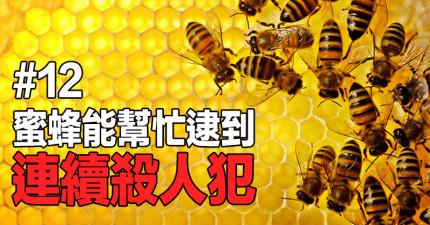 13個讓你發現「蜜蜂其實是人類大幫手」的驚奇蜜蜂冷知識!他們其實已經幫助人類抓到很多殺人犯了!