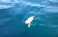 他們在大海中超意外看到一隻快溺死的小狗狗,他會出現在那的故事會讓你難以置信!