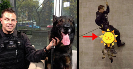 這隻看起來帥氣無比的英勇警犬,已經因為垂降訓練時的「超萌爆笑模樣」而在網路上爆紅了!
