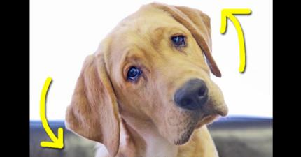狗狗「歪頭歪腦」不只是耍可愛 背後貼心原因會讓你更寵愛家裡的毛小孩!