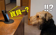 爸爸決定讓毛小孩「跟不在家的媽媽通電話」,結果狗狗居然真的開始對話的萌樣讓我太吃驚了!