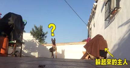 離家好幾天的主人回來時決定「躲起來讓狗狗找」,你該看看狗狗終於找到主人時的爆炸反應。