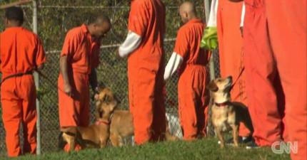 這間監獄嘗試把流浪狗帶給囚犯們照顧,結果證明這真是一個最完美的決定!