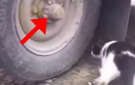 這隻在獵殺老鼠的貓咪完全找不到剛逃走的獵物,當你看到老鼠躲到哪裡時會大噴笑!