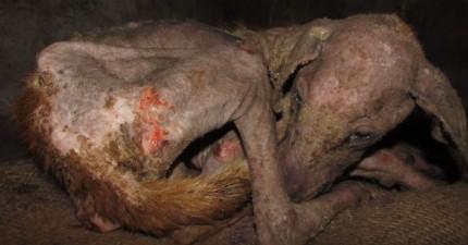 這隻流浪狗被搜救人員找到時原本已經放棄生存下去的意志,但看完現在的他你會忍不住喜極而泣!