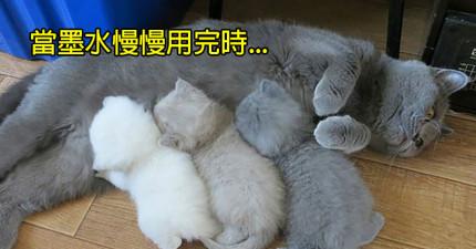 30隻累到墨水都快用完的超驕傲貓咪父母親。