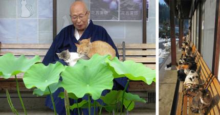 這間有50隻貓咪的「貓寺」是很多貓奴一定要去的朝聖勝地,聽到那裏貓咪的身世後你也會想要去!