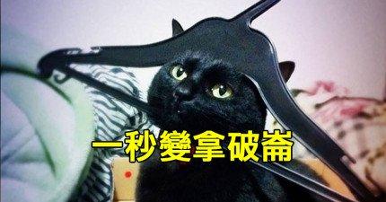 20隻明明就錯得離譜卻一點也不需要你原諒的煞氣貓咪。