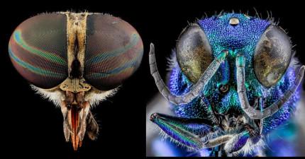 20種「近拍後你才會發覺他們比你還美麗」的驚奇地球昆蟲。