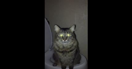 男子半夜醒聽到廁所裡有聲音,結果一去看就感動到快炸掉了!