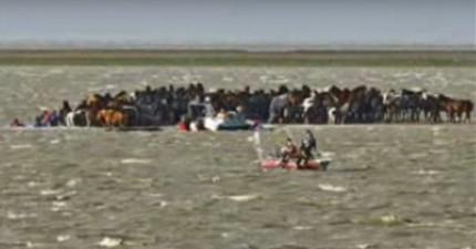 這200匹馬被暴雨困在小島上動彈不得,結果一群騎著馬的女人用了一個超天才的方法成功救援!