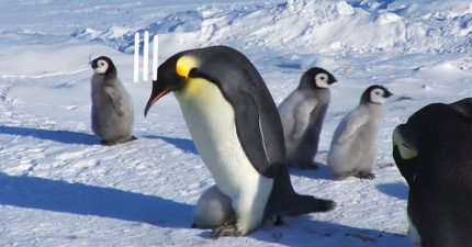 一開始不懂這隻企鵝爸爸走起路為何這麼詭異辛苦,後來才發現是因為「他有個賴著不想長大的欠扁小孩」...