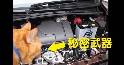 小貓咪誤入汽車引擎室怎麼逗都不出來,最後「秘密武器」救援過程讓周圍的人類都被萌死了!