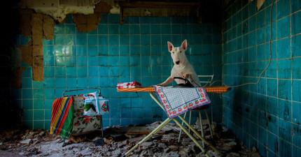 她帶著賤狗冒著危險闖進被遺棄的神祕地方,拍下的結果讓我看到了一隻狗狗該有的完美生活!