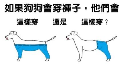 這個「狗狗該怎麼樣穿褲子」的問題已經讓網路上吵翻了!其實是有正確答案呢...
