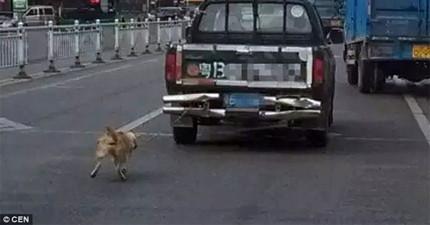 路人拍到這台貨車後面綁著狗狗高速前進,一開始狗狗還跟得上,但之後拍下的照片讓我快要氣哭了...