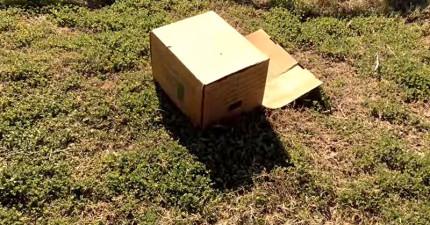 男子騎車在「周圍10公里都空無一物的公路」發現這個詭異紙箱,打開後讓他忍不住完全呆掉了...