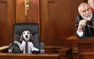 這名女子因為被抓到虐待狗狗,法官給她判的「超臭」爽快刑罰會讓你希望所有法官都這麼英明!