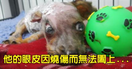這隻小狗「被主人泡進滾水中面目全非」,但他努力奮戰後的可愛模樣會讓你也哭到面目全非了...