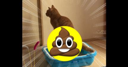 一名網友上傳照片說他們家貓咪便便時模樣超奇怪,沒想到網友紛紛上傳「類似經歷」照片證明貓咪其實是恐龍的後代...