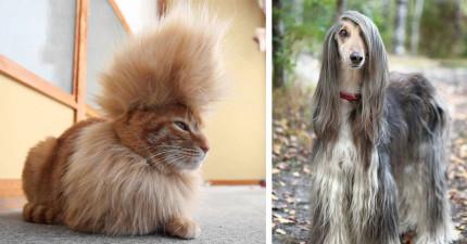 30隻你應該要印下來然後拿給你的髮型師的「髮型比你好看」動物。
