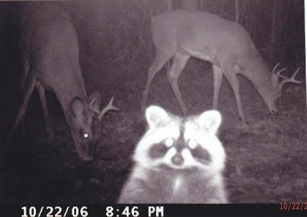 06 trail cam animals funny when humans arent around The strangest things show up on the trail cam (20 Photos)