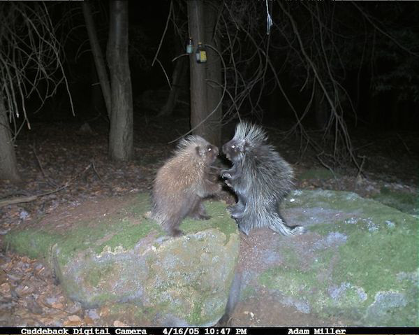 07 trail cam animals funny when humans arent around The strangest things show up on the trail cam (20 Photos)