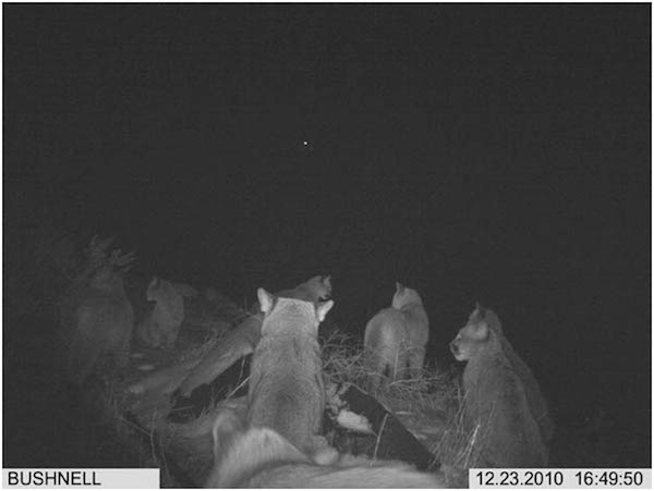 08 trail cam animals funny when humans arent around The strangest things show up on the trail cam (20 Photos)
