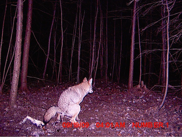 The strangest things show up on the trail cam (20 Photos)