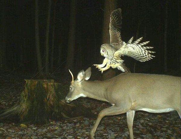 10 trail cam animals funny when humans arent around The strangest things show up on the trail cam (20 Photos)