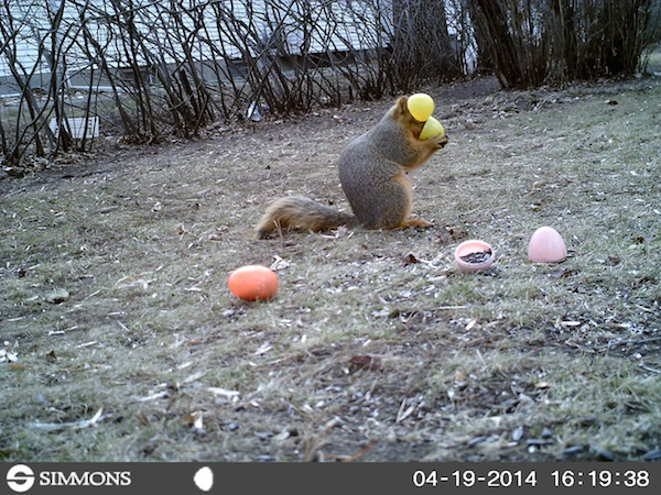 11 trail cam animals funny when humans arent around The strangest things show up on the trail cam (20 Photos)