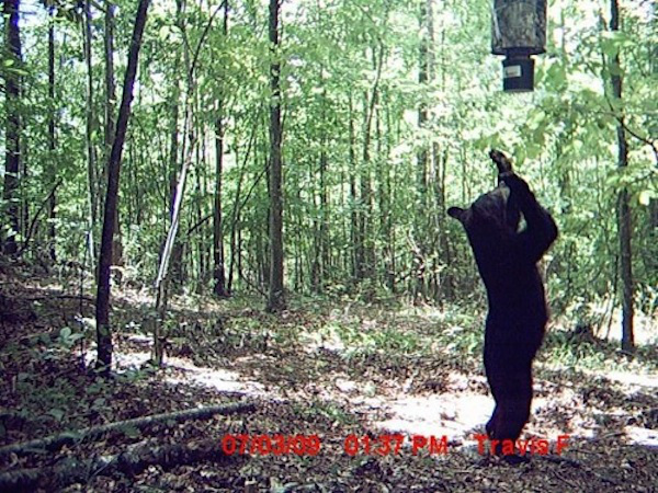 13 trail cam animals funny when humans arent around The strangest things show up on the trail cam (20 Photos)