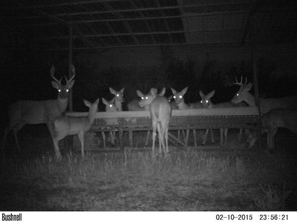15 trail cam animals funny when humans arent around The strangest things show up on the trail cam (20 Photos)