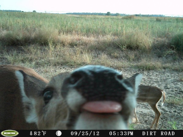 16 trail cam animals funny when humans arent around The strangest things show up on the trail cam (20 Photos)